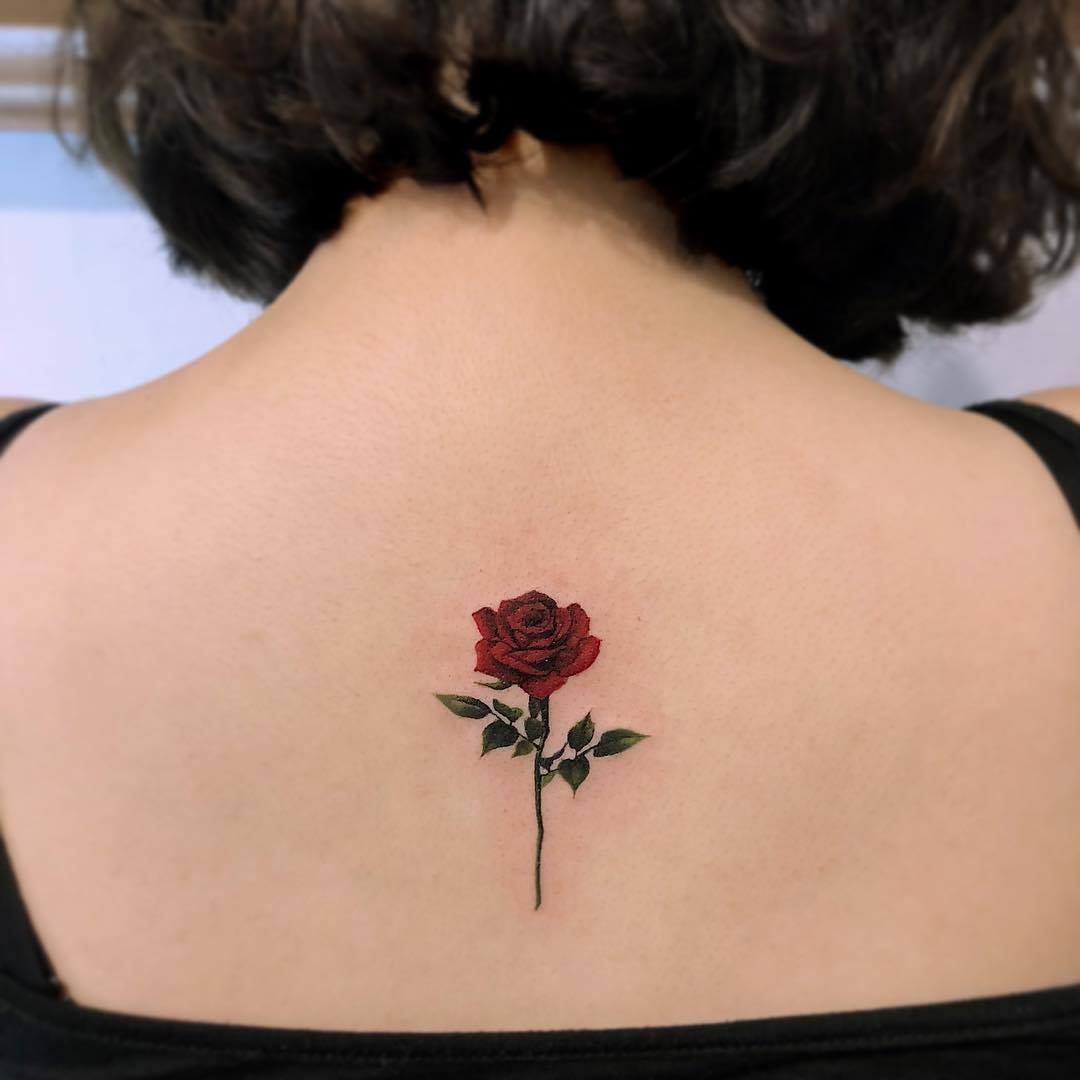 hồng hồng mini giữa sóng lưng